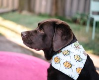 How To Make The Cutest DIY Reversible Dog Bandanas  Wear ...