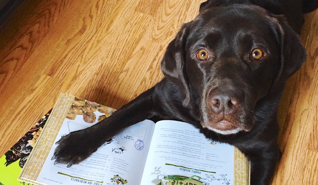 Stylish Dog Books Gift Guide