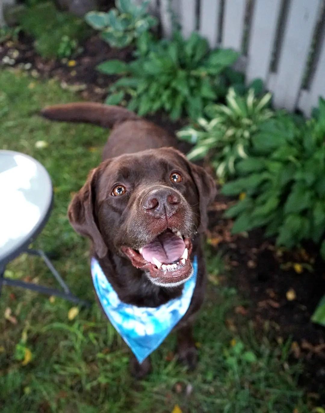Backyard Scavenger Hunt with Vita BoneArtisan Inspired® Dog Treats