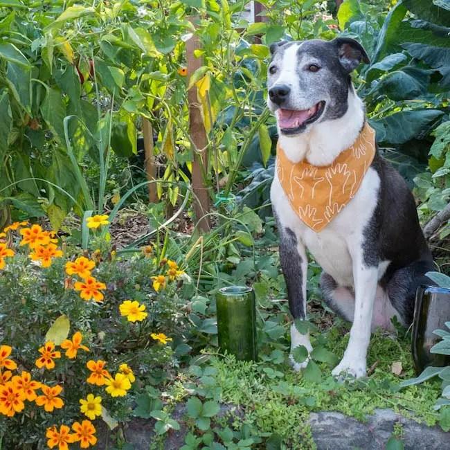 OttoFinn Dog Bandana