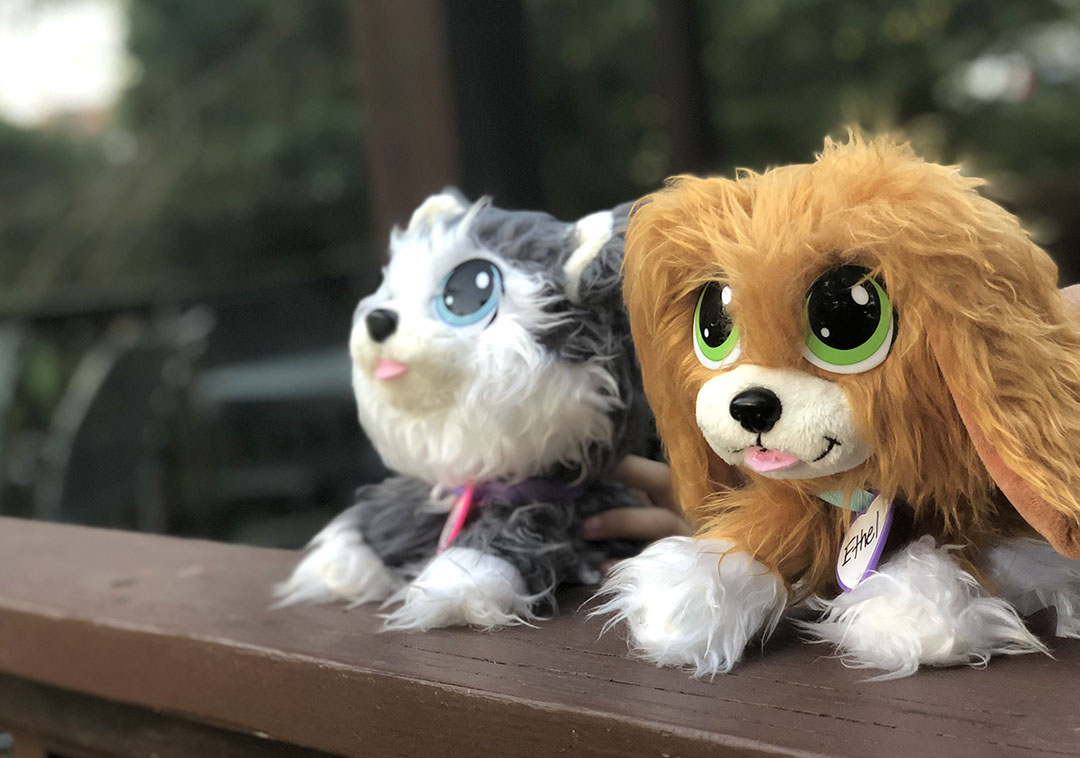 Rescue Runts Teach Kids About Adopting Pets