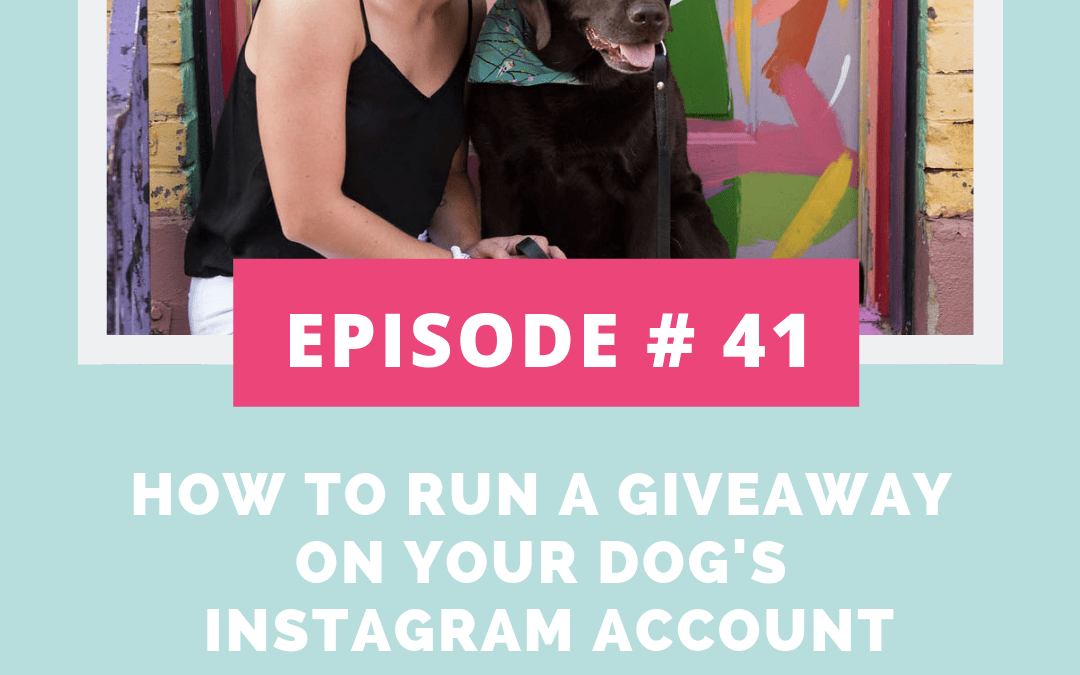 Podcast Episode 41: How to Run a Giveaway on Your Dog's Instagram Account