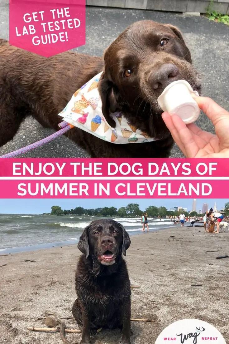 Dog Days of Summer in Cleveland