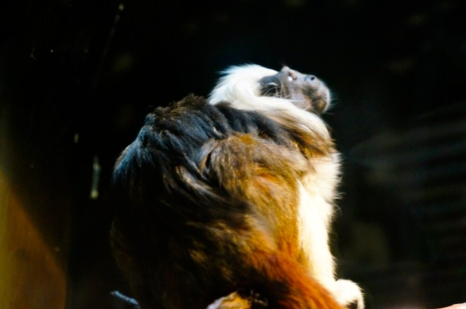 ^^ Such a handsome monkey!
