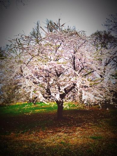 CP_Spring