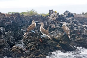 Galapagos Islands, Ecuador