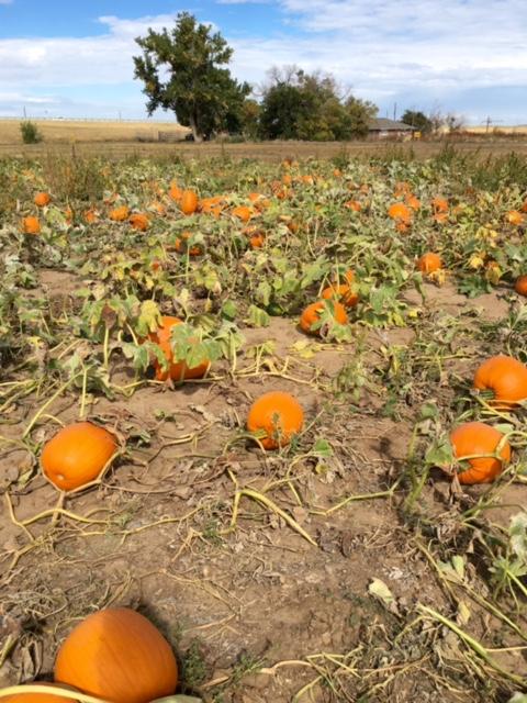 11_pumpkins