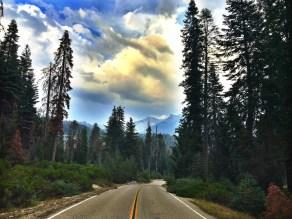13_SequoiaNight