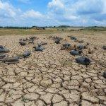 Nature Drought Marsh Ducks Gironde Estuary