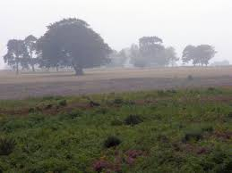 light rain in a field with trees