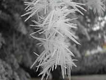 A branch showing Soft Rime crystals