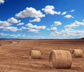 A field with Rolling Hay Bales