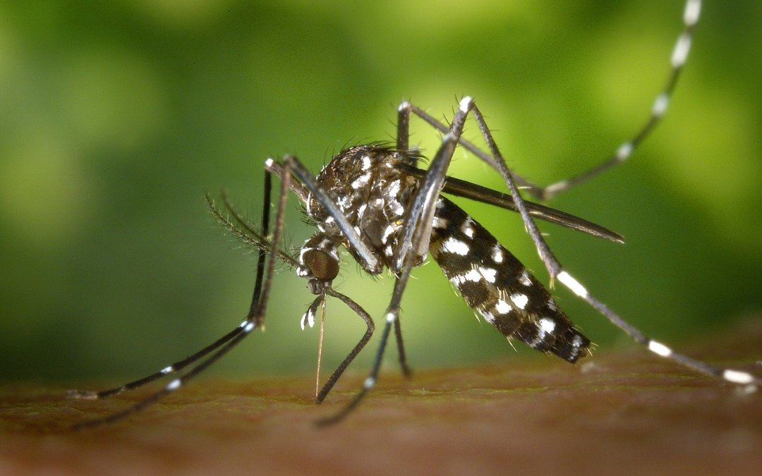 Mosquitoes- Why They Bite Some People More Than Others