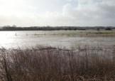 floods allotment2