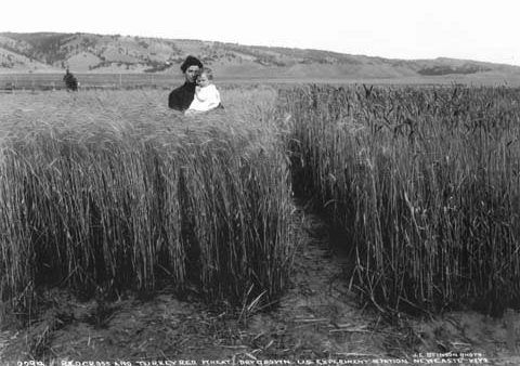 Winter Wheat: A Different Way of Thinking about Goals