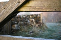 frosty-morning-spiderweb
