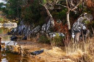 Murph in Killarney National Park 1