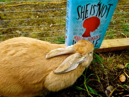 Rabbits need diverse books too