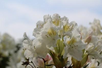 Canon EOS 100D Testbild Blüten