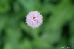 SAMSUNG NX300 Blume