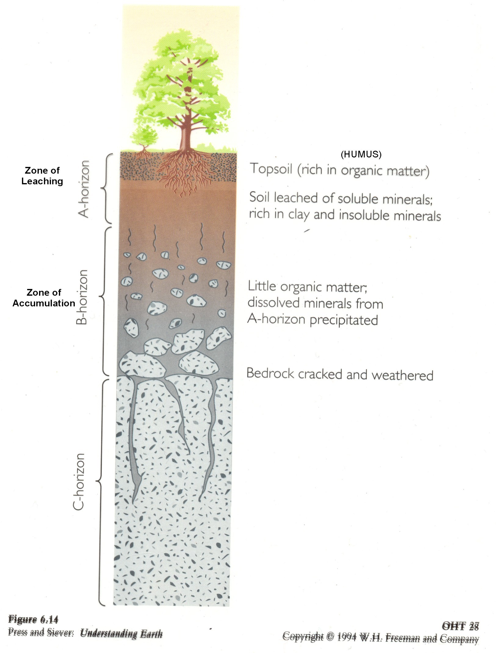 horizon diagram soil formation model a 12 volt wiring web page for terry j boroughs