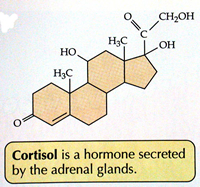 adderall effect cortisol