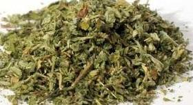 medicinal health uses of damiana dried herbs