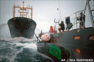 Whalers clash with Conservationists