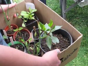 beginner-container-gardening