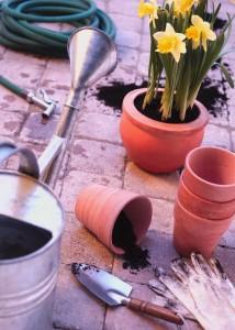plant-container-garden