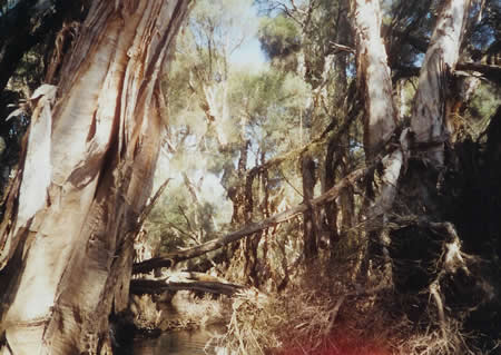 Blackwood River, Western Australia
