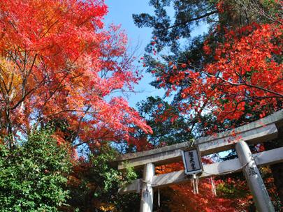 「西江寺 箕面 紅葉」の画像検索結果