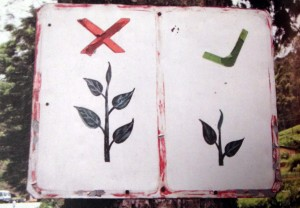 Raccolto fine - Giardini di Darjeeling - ArtedelRicevere - Milano e online