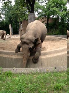 un_elefante_berlin