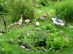 Permaculture gardens taking root