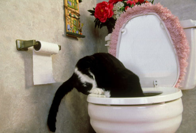 """5. """"I will learn that toilet bowl is actually not meant for drinking."""""""