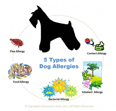 dog-allergies