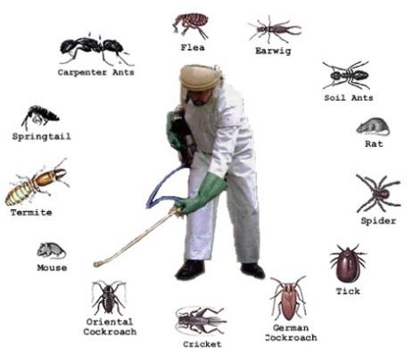 Very-Safe-Pest-Control-Services-According-DM-Control-All-Insects_1