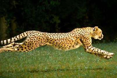 Leopardo HIIT Tabata
