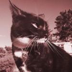 Miranda Cool Cat Picture