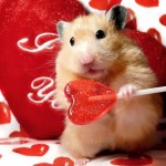 Happy-Valentine-Day-Cute-Love-Wallpapers-10