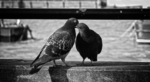 Palomas que se besan, Rotherhithe. Foto: Prad Patel