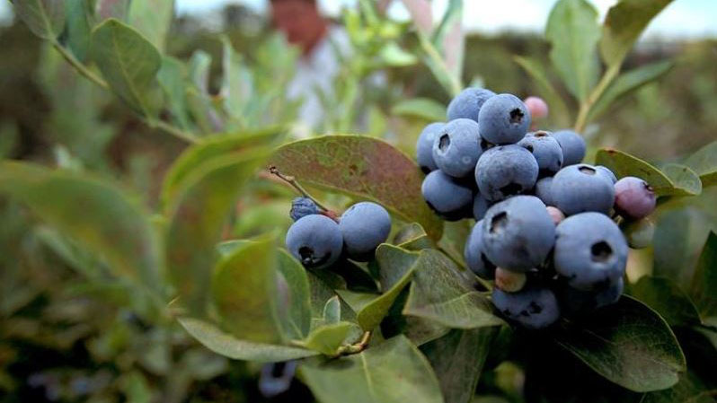 Image result for atlanta food forest