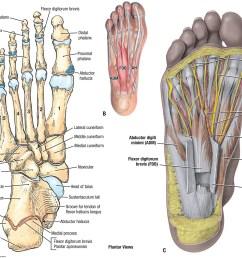 foot region anatomy diagram wiring diagram expertfoot region anatomy diagram 11 [ 1200 x 960 Pixel ]