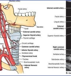 vascular diagram of neck [ 1204 x 690 Pixel ]