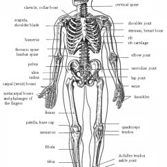 Names Of Bones In Human Skeleton Diagram T1 Repeater Housing Wiring Sport Studies Fundamental Terminology English Figure 9 Skeletal System Anterior View