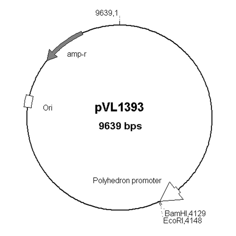 PHRM 302 Intro To Molecular Biology Spring 2012: Handout