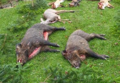 Fuchsjagd im Hegering 3