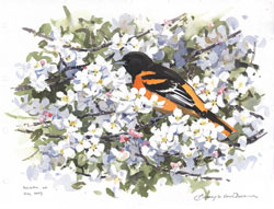 oriole and crab apple