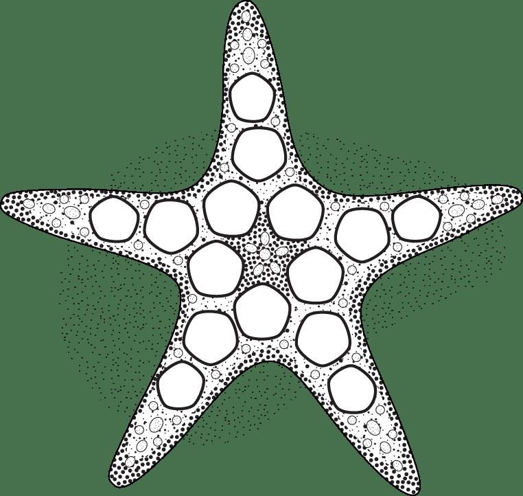 Starfish — MIT Mystery Hunt 2015